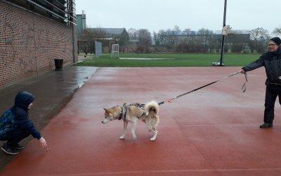 Besuch der Hundetrainerin